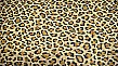 Limited Edition:Leopard Print Suede
